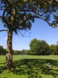 Baum im Schlossgarten